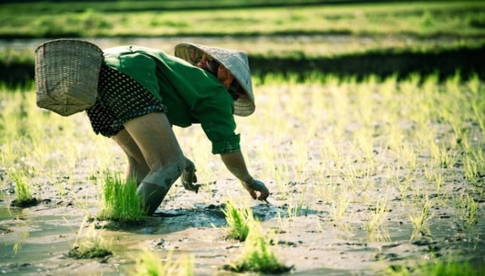 Vietnam_Culture_Riz-755x484