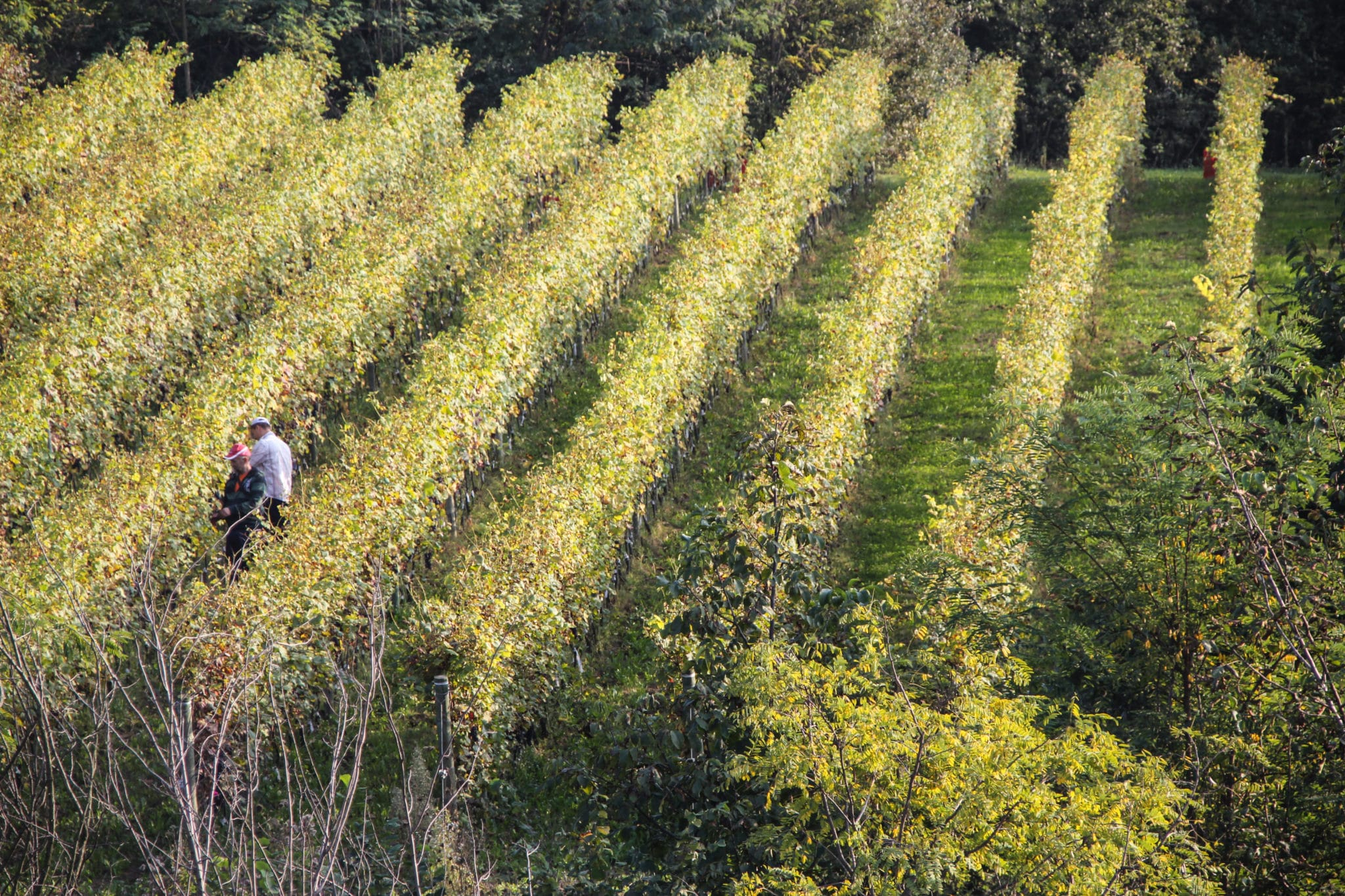 Serradenari_vineyards_Barrolo