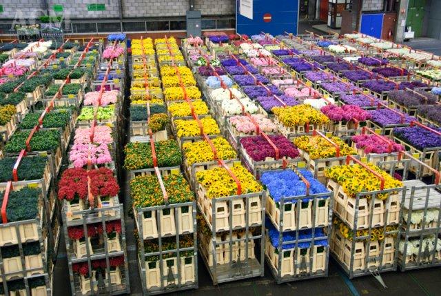 amsterdam-incentive-original-visite-de-la-bourse-aux-fleurs-g3196-1-3