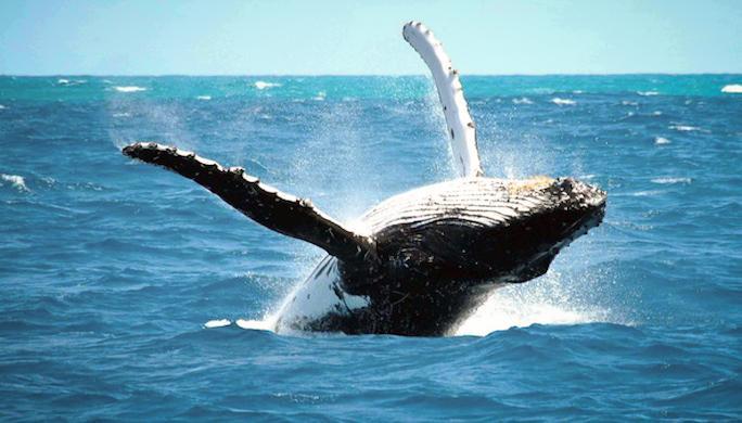 reykjavik-whales