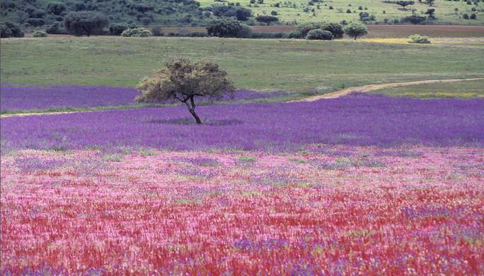 Des panoramas bucoliquesPortugal-robert.kassous-infotravel.fr