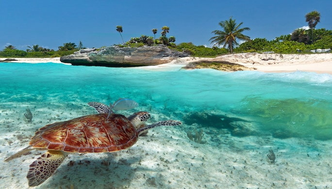 Green turtle in Mexico:/ Infotravel.fr