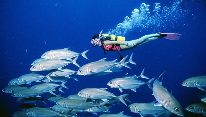 plongee-mike-ball-expeditions-coral-sea-fish-diver