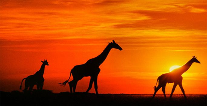 Safari afrique-du-sud