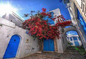 La Tunisie : Mise en place d'une politique sanitaire
