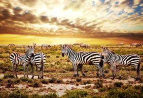 Tanganyika Expéditions: Pour un tourisme durable