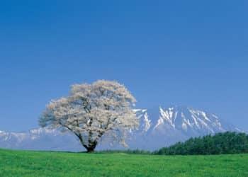 IWATE JAPON