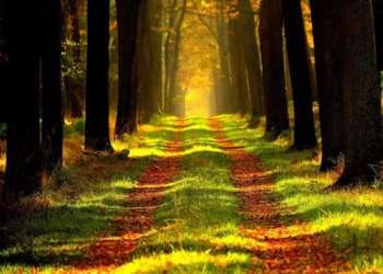 Région Île-de-France: Réouverture de 39 forêts régionales
