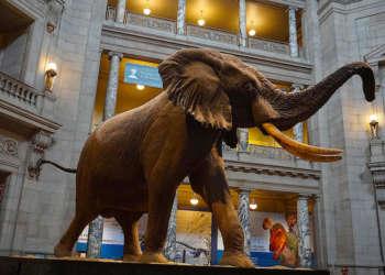 Musée National d'Histoire Naturelle de Washington