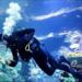L'Aquarium de Biarritz recherche plongeur !
