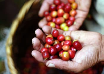 Café, Costa Rica, tourisme, durable