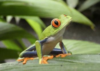 Costa Rica : Un modèle de tourisme durable