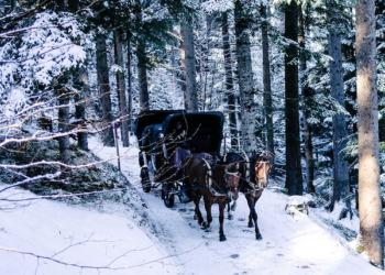 Quand le cheval remplace le ski