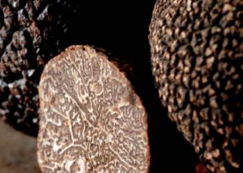 La Truffe noire inscrite au patrimoine culturel immatériel de France