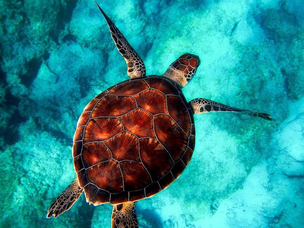 Où se trouve la plus belle destination de plongée du monde ?