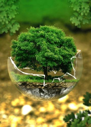 Une nouvelle marque pour les forêts françaises.