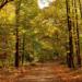 Val d'Oise : 130  balades en pleine nature