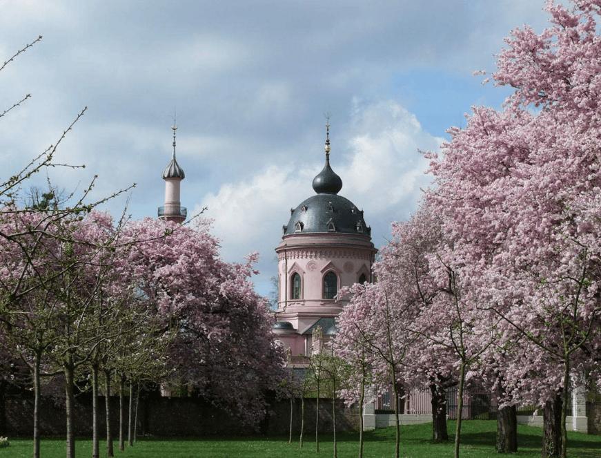 Les cerisiers en fleurs du château de Schwetzingen