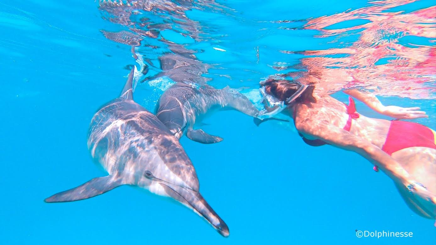 Valerie Volton Dolphiness